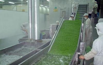 供应可提升式气泡清洗机 厂家专业制造304不锈钢药材清洗机